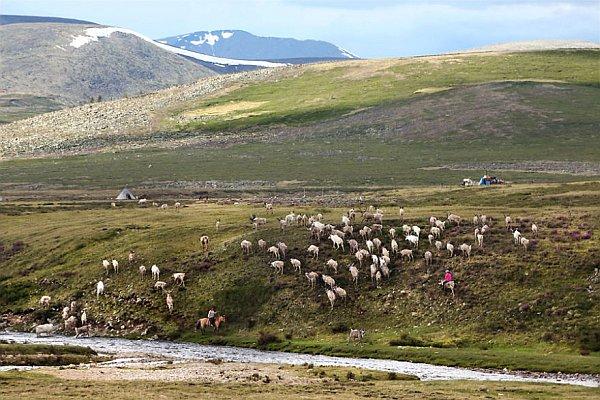 Mongolscy kowboje
