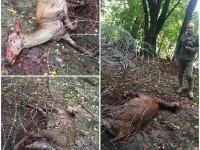 Przez imigrantów umierają zwierzęta w Europie